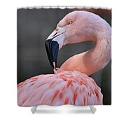 Picky Shower Curtain