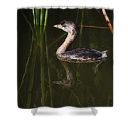 Pied-billed Grebe In The Reeds Shower Curtain