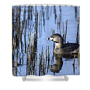 Pied-billed Grebe, Montreal Botanical Shower Curtain