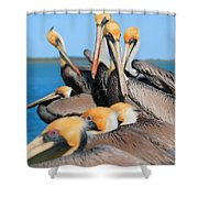 Pier Party Shower Curtain