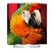 Pietro The Parrot Shower Curtain
