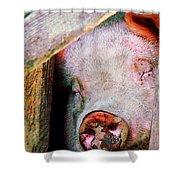 Pig Sleeping Shower Curtain