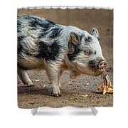 Pig With An Attitude Shower Curtain