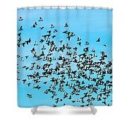 Pigeon Flight Shower Curtain