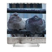 Pigeons Perching Shower Curtain