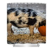 Pigging Out Shower Curtain