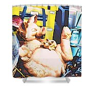 Piggy And Piglets In Store Window Shower Curtain