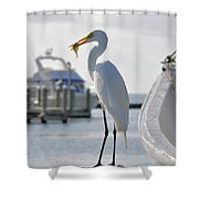 Piggy Perch For Breakfast Shower Curtain