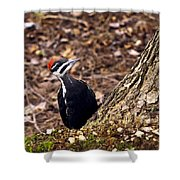 Pileated Woodpecker 3 Shower Curtain