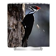 Pileated Woodpecker Dryocopus Pileatus Shower Curtain