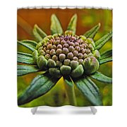 Pinchshin Bud Shower Curtain