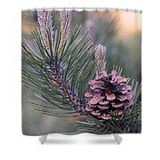 Pine Cone At Sundown Shower Curtain