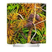 Pine Cones And Needles On A Branch Shower Curtain