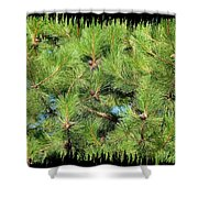 Pine Cones And Needles Shower Curtain