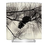 Pine Cones In The Treetops Shower Curtain