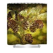 Pine Cones No.056 Shower Curtain