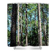 Pine Patch Shower Curtain