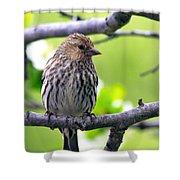 Pine Siskin Finch Baby Shower Curtain