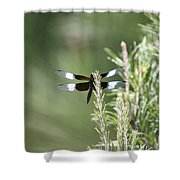 Pine Tip Shower Curtain