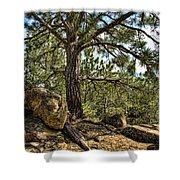 Pine Tree And Rocks Shower Curtain