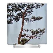 Piney Moon Shower Curtain