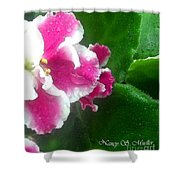 Pink African Violets And Leaves Shower Curtain