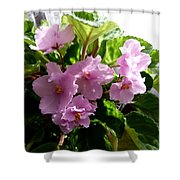 Pink African Violets Shower Curtain