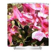Pink Alstroemeria  Shower Curtain