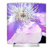 Pink And Blue Flower Shower Curtain