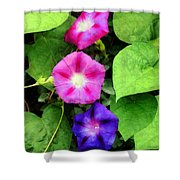Pink And Purple Morning Glories Shower Curtain