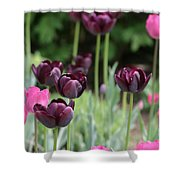 Pink And Purple Tulips Shower Curtain