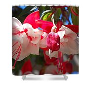 Pink And Red Fuchsia Shower Curtain