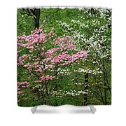 Pink And White Shower Curtain