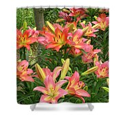Pink And Yellow Daylilies Shower Curtain