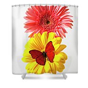 Pink And Yellow Mums Shower Curtain