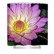 Pink And Yellow Waterlily Shower Curtain