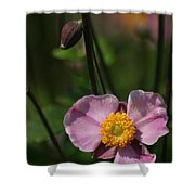 Pink Anemone Shower Curtain