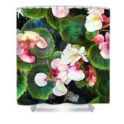 Pink Begonias Shower Curtain