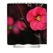 Pink Blossom In The Evening Shower Curtain