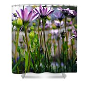 Pink Blossoming Flowers Shower Curtain