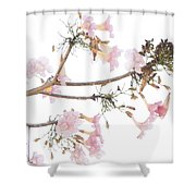 Pink Blossoms In Panama Shower Curtain
