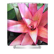 Pink Bromeliad Shower Curtain