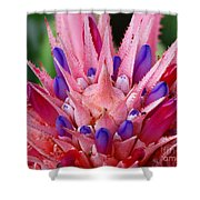 Pink Burst Shower Curtain