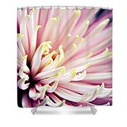 Pink Chrysanthemum Shower Curtain