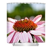 Pink Cone Flower Shower Curtain