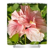 Pink Double Hibiscus Shower Curtain