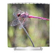 Pink Dragonfly In The Marsh Shower Curtain