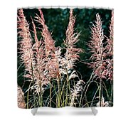 Pink Feathery Reflectors Shower Curtain