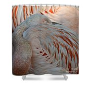 Pink Flamingo 7 Shower Curtain