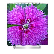 Pink Flower Miss You Shower Curtain